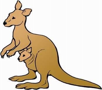 Känguruwettbewerb